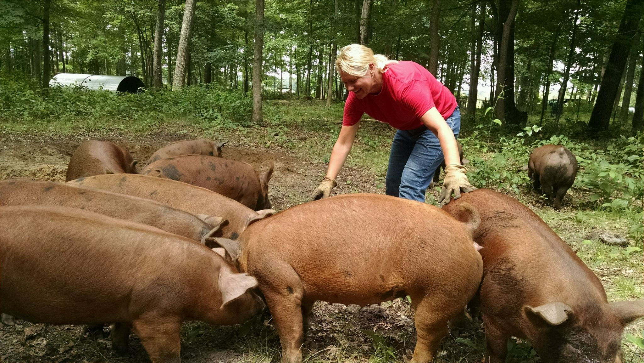 Bonnie with Pigs